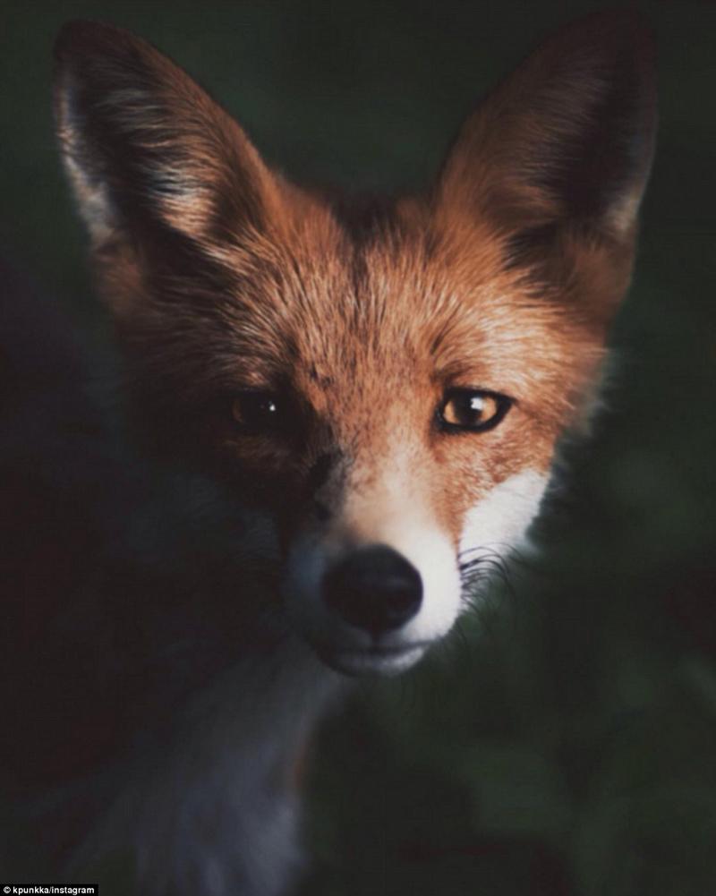 芬摄影师拍神秘野生动物世界引关注