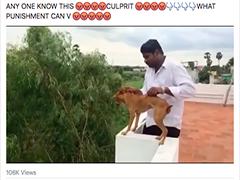男子把流浪狗从楼顶摔下引众怒,被人悬赏万元人肉