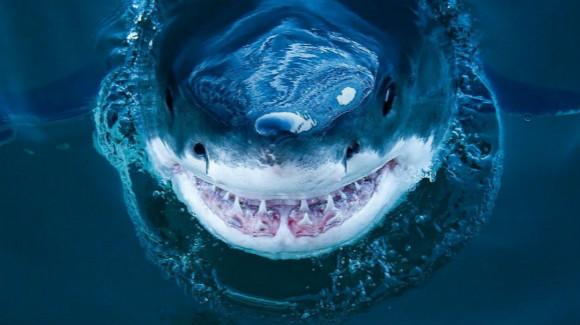血盆大口的惊悚微笑 摄影师近拍鲨鱼罕见照