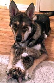 美国狗猫相亲相爱友情感人