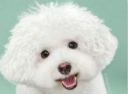美摄影师拍摄狗狗美容前后对比照