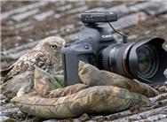小猫头鹰玩相机当摄影师拍照