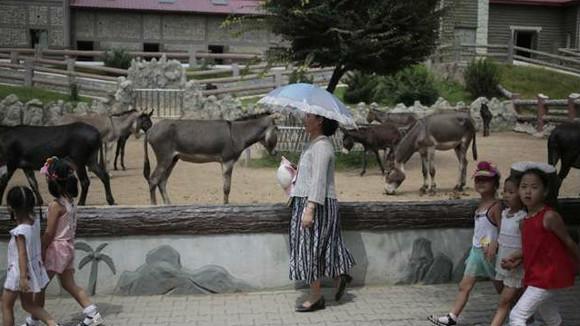 朝鲜平壤动物园里有什么?热门景点让人意想不到