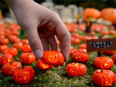 英乐园展示世界最小南瓜灯 高仅3厘米