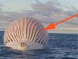 男子海上看到一巨大的球 细看吓尿