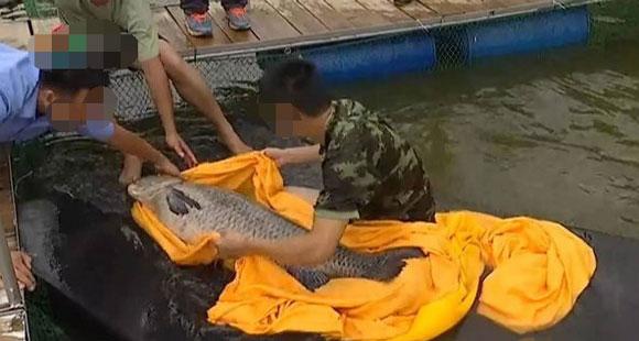 男子河里捞出一大鱼 回家后在鱼肚竟发现十万现金