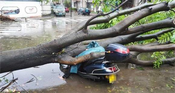 台风来袭广东女子连人带车被大树砸中 不幸身亡