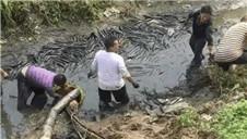 10年没干过的鱼塘 抽掉水后…