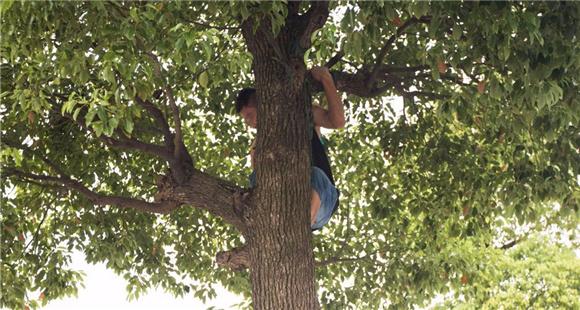 男子爬树上 只为偷看这个刺激画面