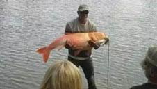 男子钓鱼被罚20万 原因让人后怕