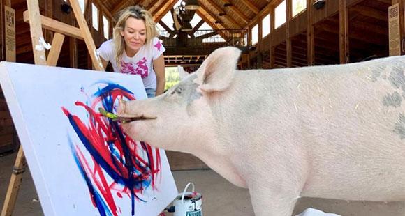 小猪天赋惊人堪称动物界毕加索 将举办画展