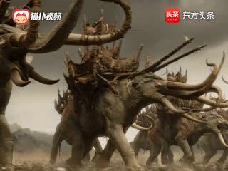 人族和半兽人开战,没想到遭遇可怕的象兵,人族战士被活活踩死!