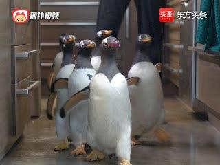 美国大叔居然在家养了6只企鹅,还因此走上人生巅峰!