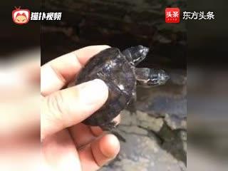 双头乌龟:房子贵,咱们挤一挤