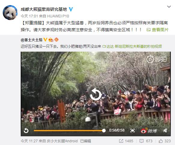 女童坐围栏看熊猫坠入饲养池!危险时刻,保安这一举动太关键了!