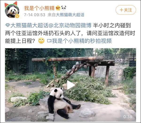动物园回应砸熊猫 目前状况良好