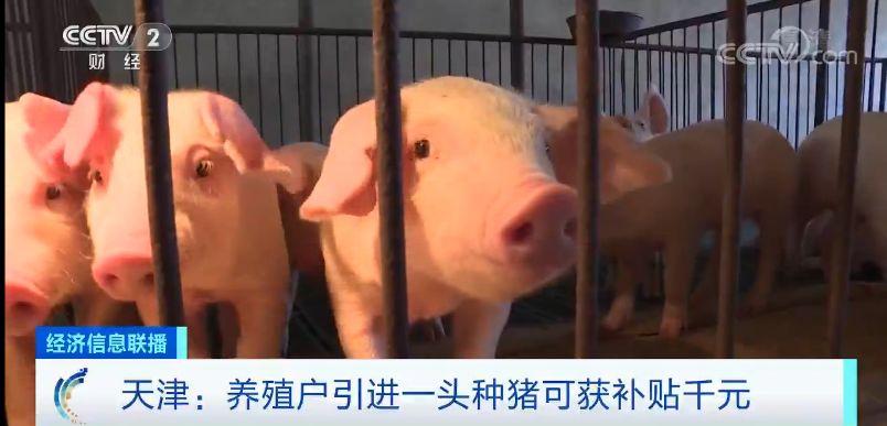 """猪肉价格能否""""稳住"""",看看专家给出的时间点"""