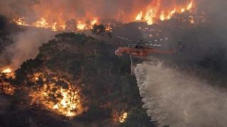 澳洲大火四个月后,不可思议的一幕出现了!专家也叹为观止!
